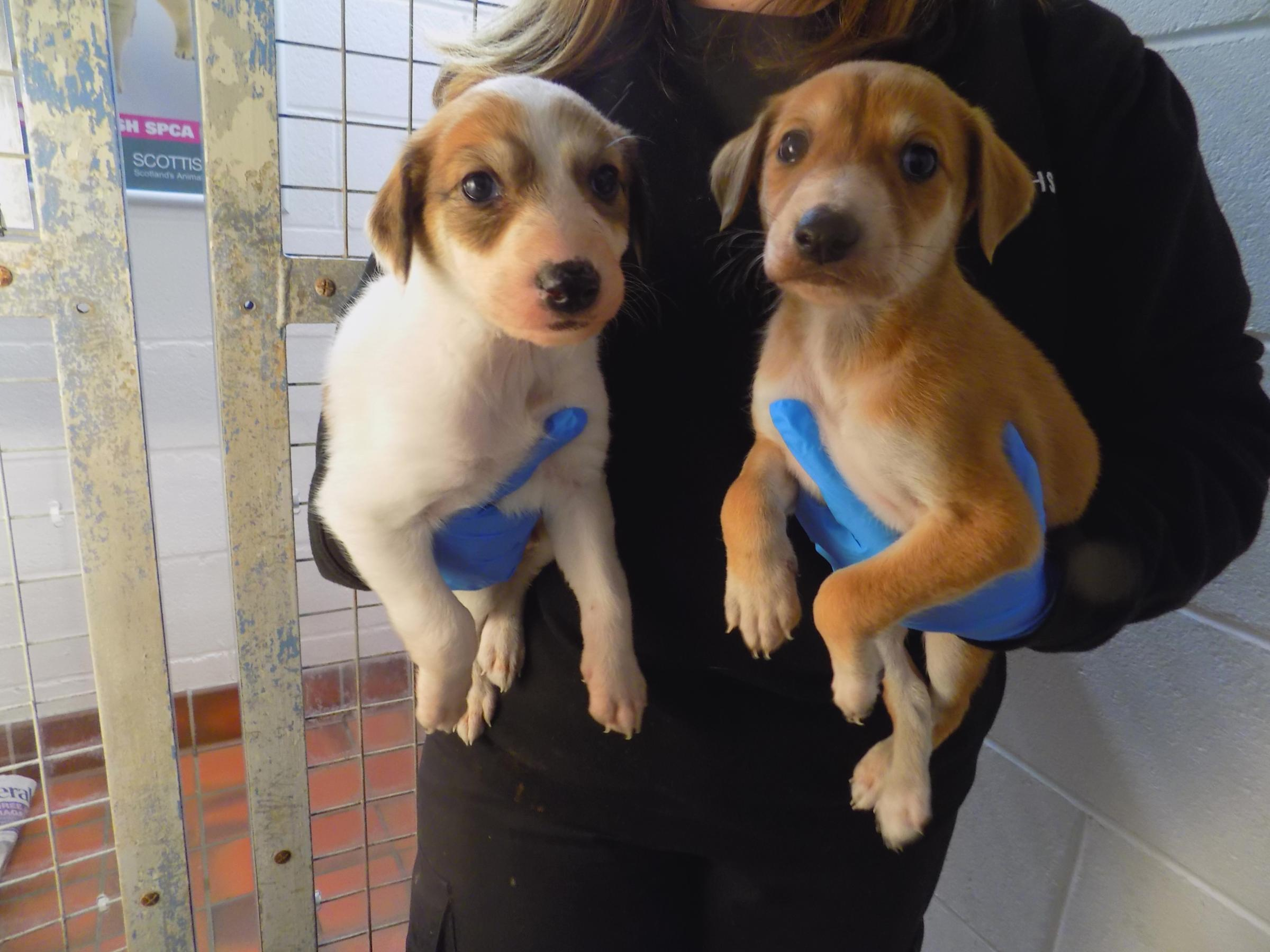 Puppy food plea from Ayr's Scottish SPCA centre