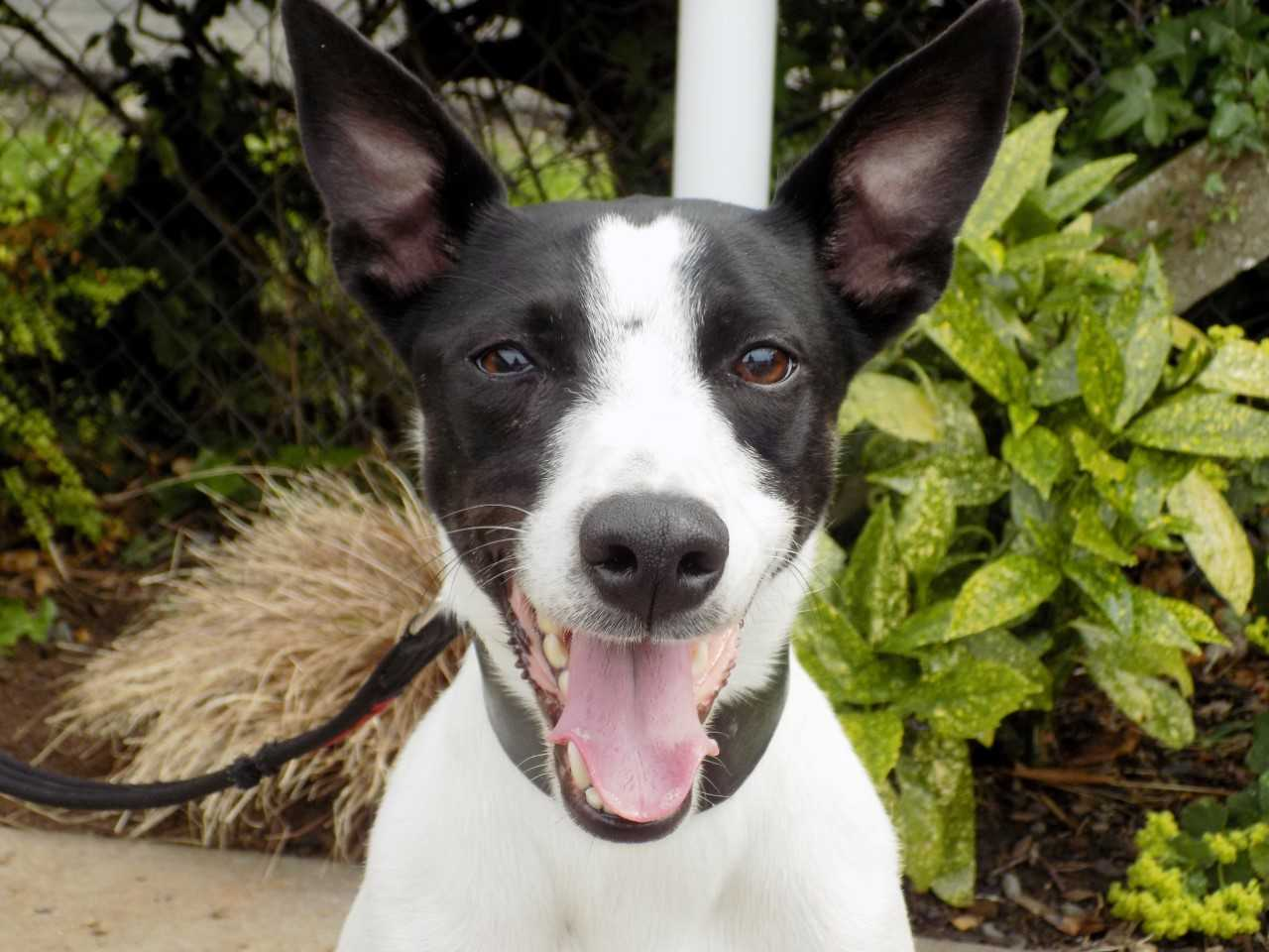Pet of the Week: Patch